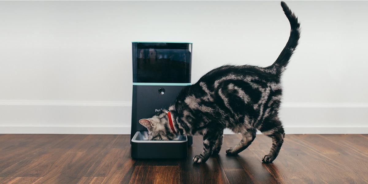 Animali domestici e tecnologia, un binomio possibile