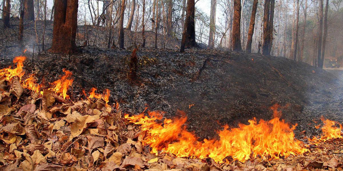 Informazioni aggiornate e affidabili sugli incendi grazie agli open data